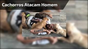 Cachorros Atacam Homem Deitado Ao Chão, Mas É Um Ataque De Fofura!