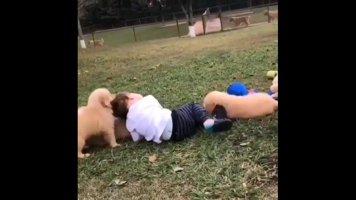 Cachorros atacando uma criança