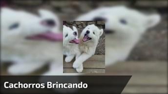 Cachorros Brancos Brincando No Quintal, As Carinhas Deles São De Felicidades!