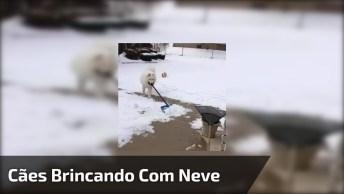 Cachorros Brincando Com A Neve, Olha Só Como Essa Galerinha Se Diverte!