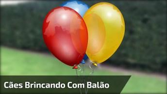 Cachorros Brincando Com Balão De Festa, Uma Alegria Que Demora Para Acabar!