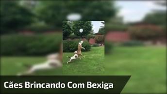 Cachorros Brincando Com Bexiga, Eles Adoram Cabecear A Bola!