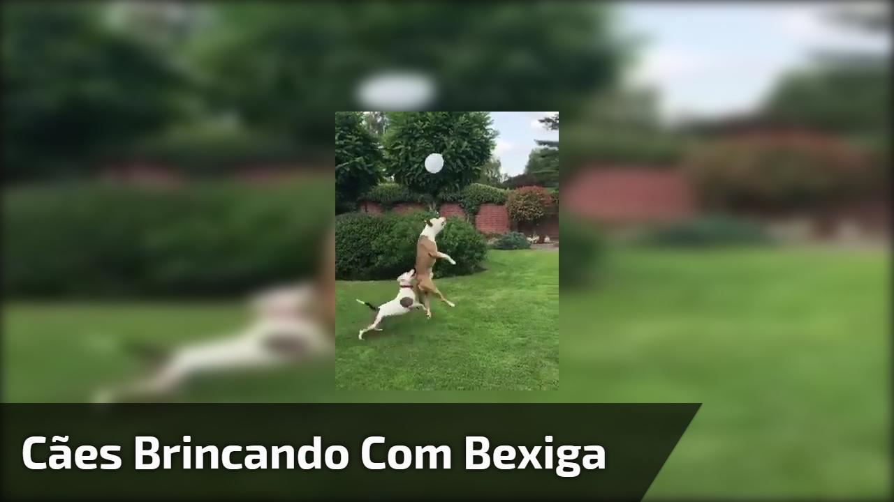 Cães brincando com bexiga
