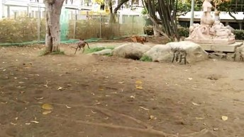 Cachorros Brincando De Correr No Parque, Eles São Lindos E Espertos!