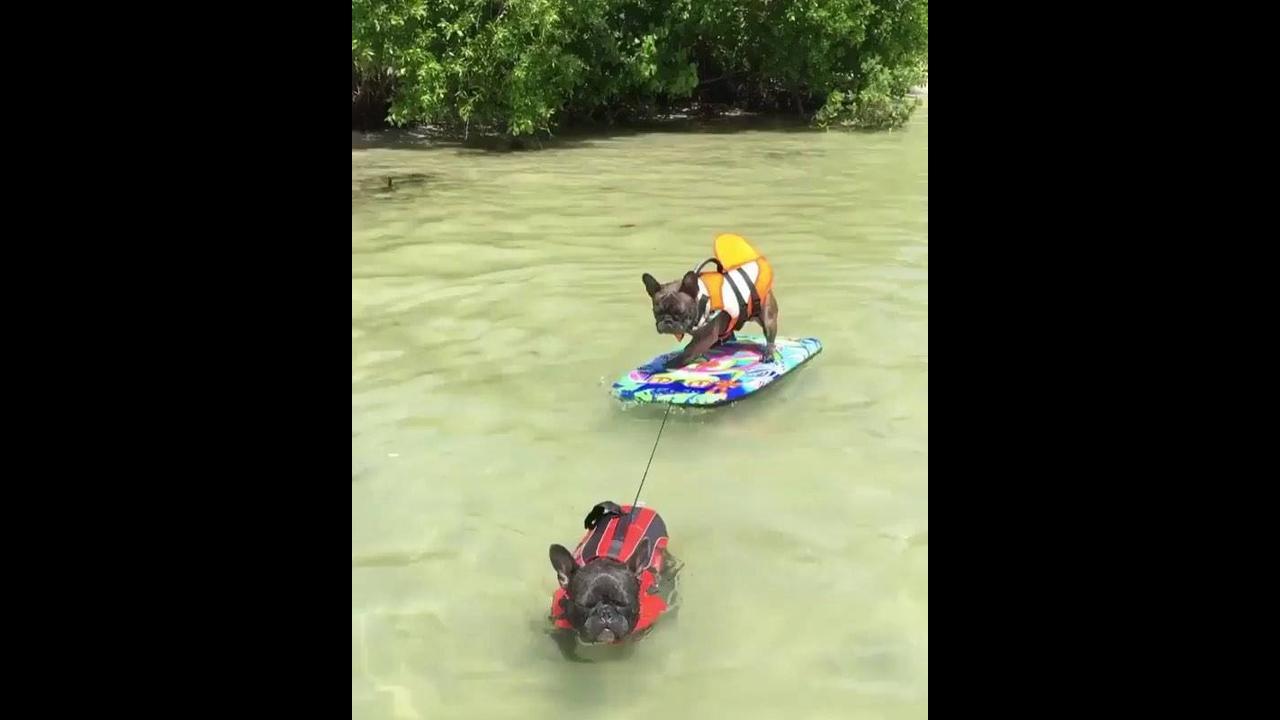 Cachorros brincando na água