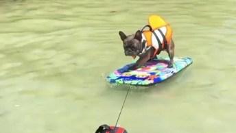 Cachorros Brincando Na Água, Eles Estão Se Divertindo Com, Segurança!