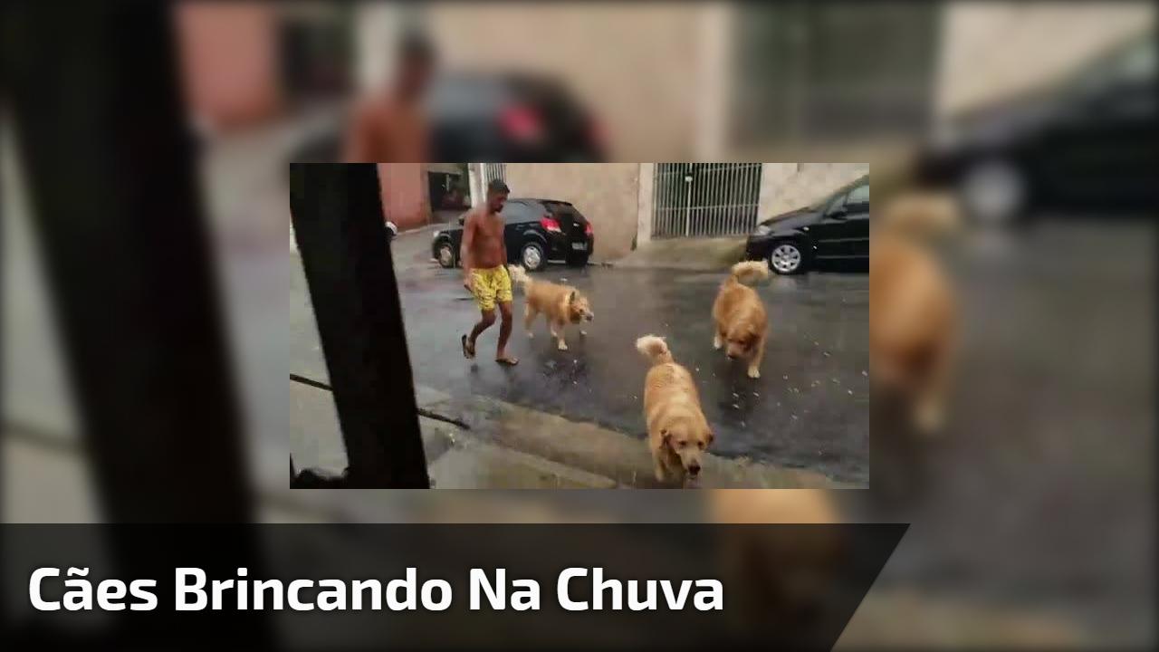 Cães brincando na chuva