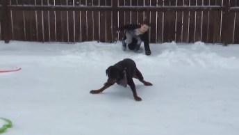 Cachorros Brincando Na Neve, Olha Como Essa Galerinha Diverte!