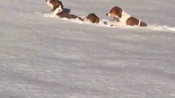 Cachorros Brincando Na Neve, Veja A Alegria Desses Peludos!