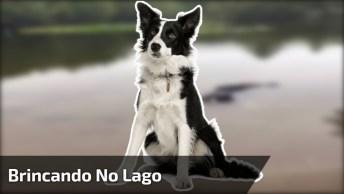 Cachorros Brincando No Lago, Um Boiando E O Outro Vem Atrapalhar!