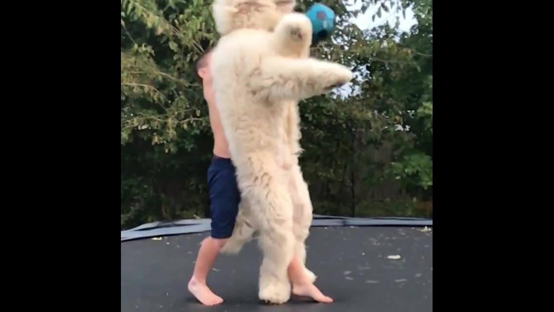Cachorros caindo e fazendo coisas engraçadas