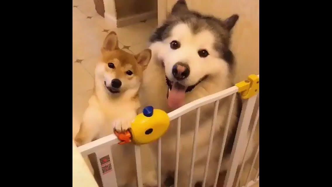 Cachorros com as carinhas mais felizes que verá hoje