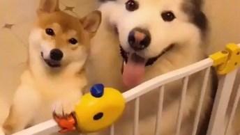 Cachorros Com As Carinhas Mais Felizes Que Verá Hoje, Que Fofura!