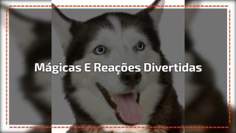 Cachorros Com As Reações Mais Engraçadas Com A Mágica De Seus Donos!