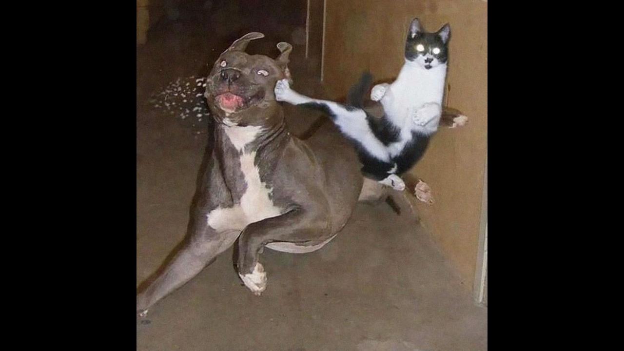 Cachorros com medo de gatos, que cenas mais engraçadas