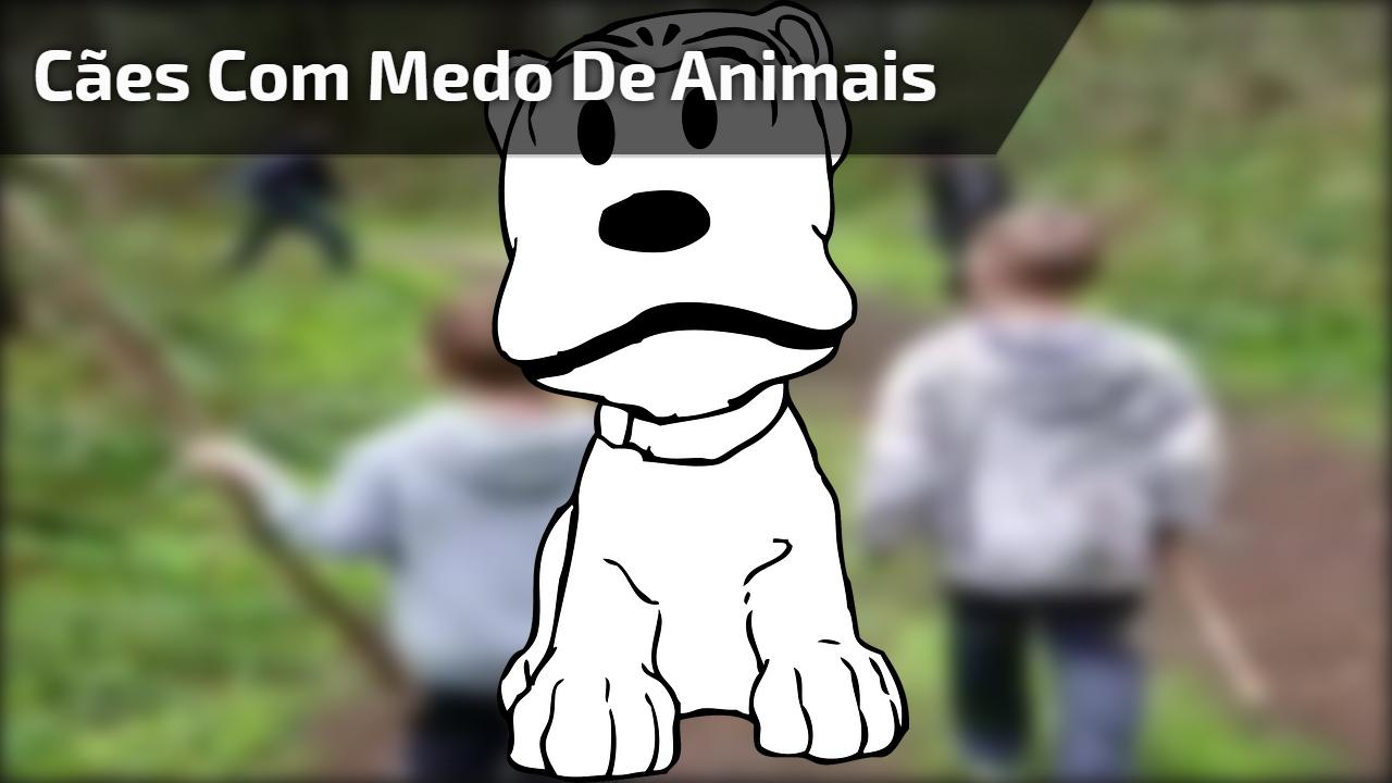 Cães com medo de animais