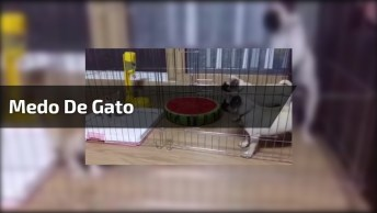 Cachorros Com Medo De Um Gato Super Pequeno, Veja O Que Eles Aprontam!