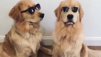 Cachorros Com Óculos Escuro, Eles Tem Mais Estilo Que Os Humanos!