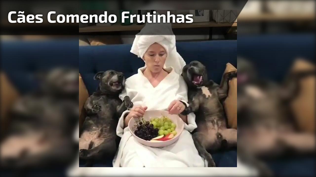Cães comendo frutinhas