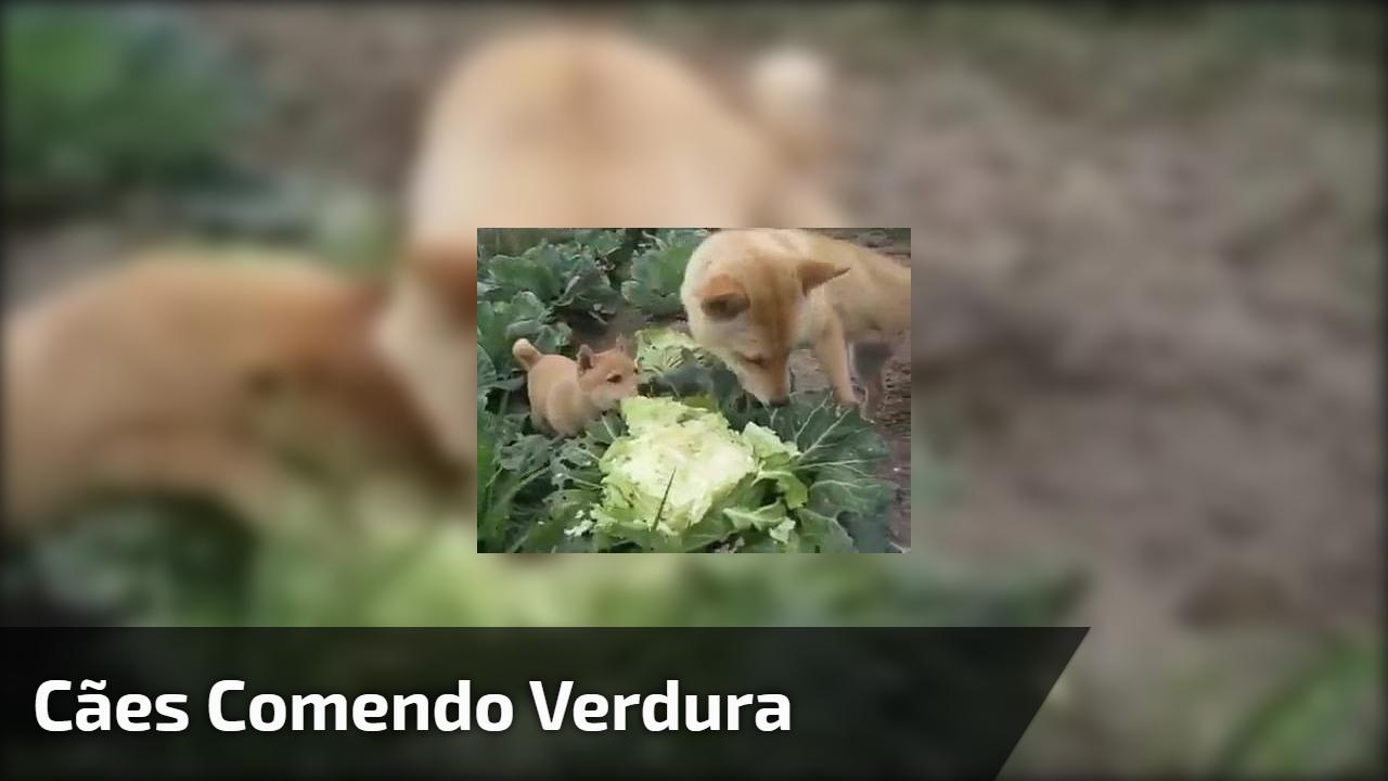 Cães comendo verdura