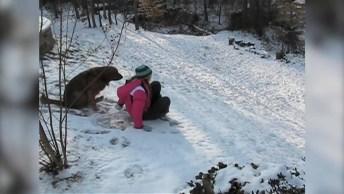 Cachorros Conhecendo A Neve Pela Primeira Vez, Olha Alegria Deles!