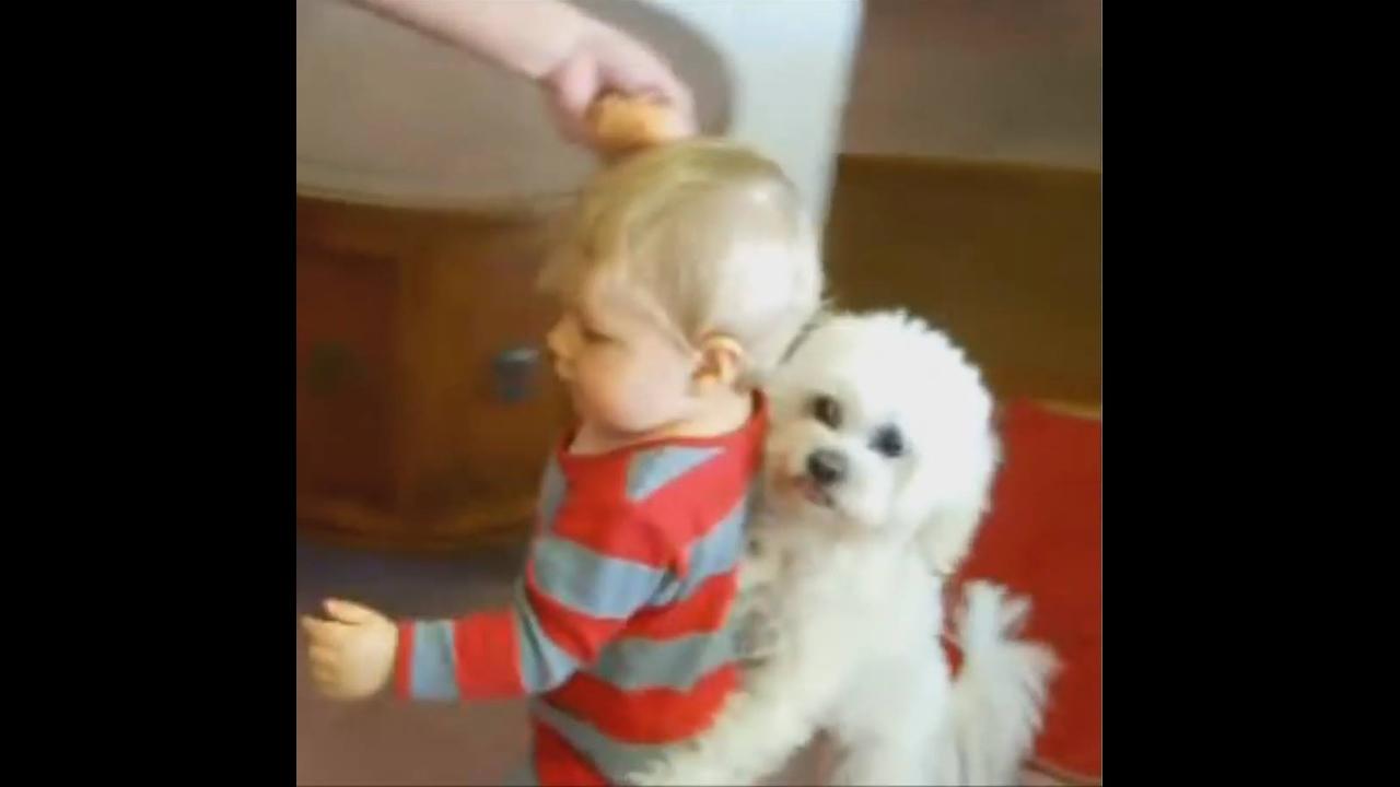 Cachorros cuidando de bebês