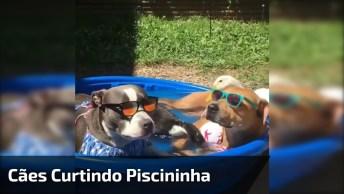 Cachorros Curtindo Uma Piscina, Da Só Uma Olhada No Estilo, Kkk!