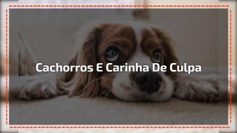Cachorros Demonstrando Sua Culpa Por Estragos Feito Na Casa De Seus Donos, Kkk!