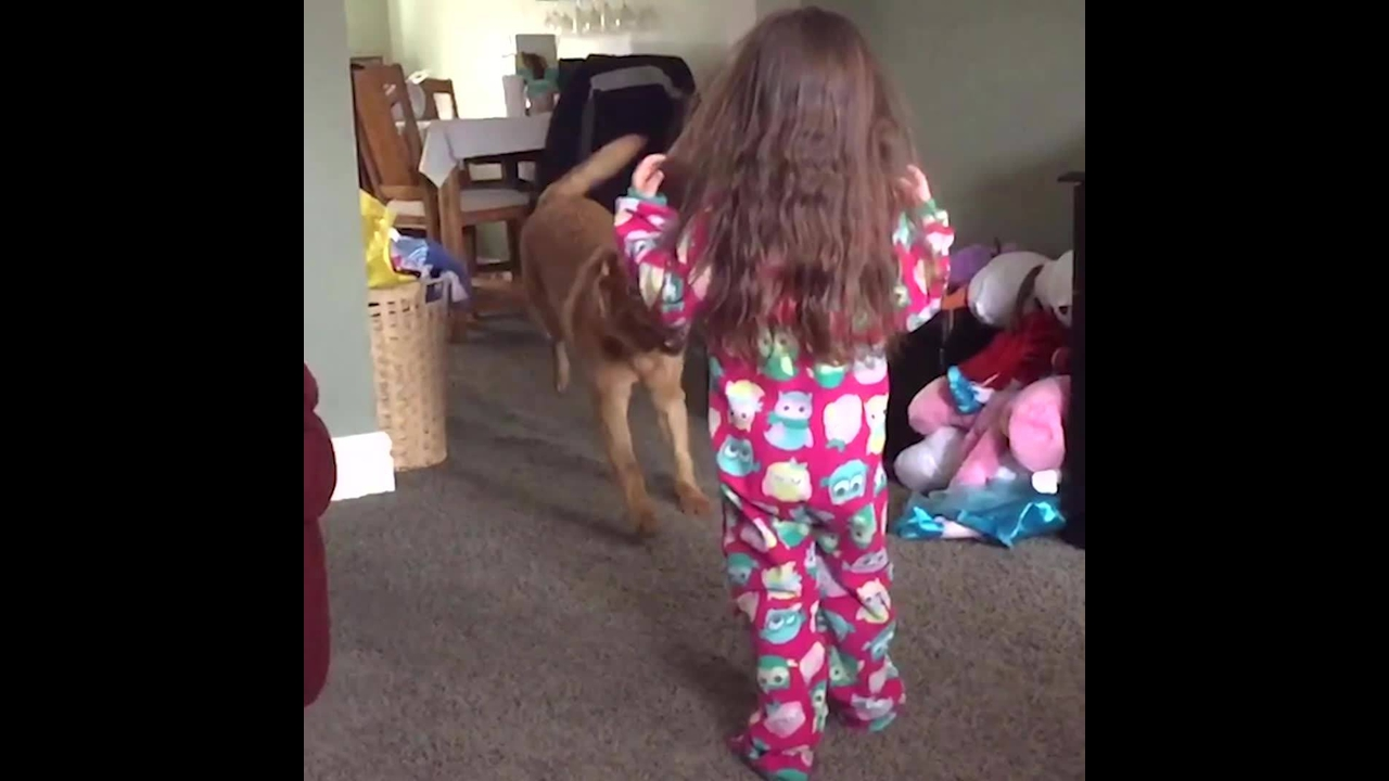 Cachorros derrubando crianças
