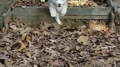 Cachorros Descendo Escada Em Câmera Lenta, Uma Fofura De Vídeo!