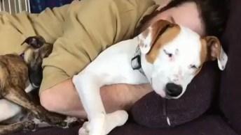 Cachorros Dormindo Com Seu Dono, Olha Só Que Imagem Mais Fofa!