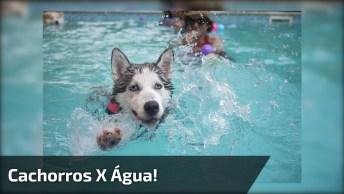 Cachorros E Água, Parece Que Eles Não Se Dão Muito Bem Hahaha!