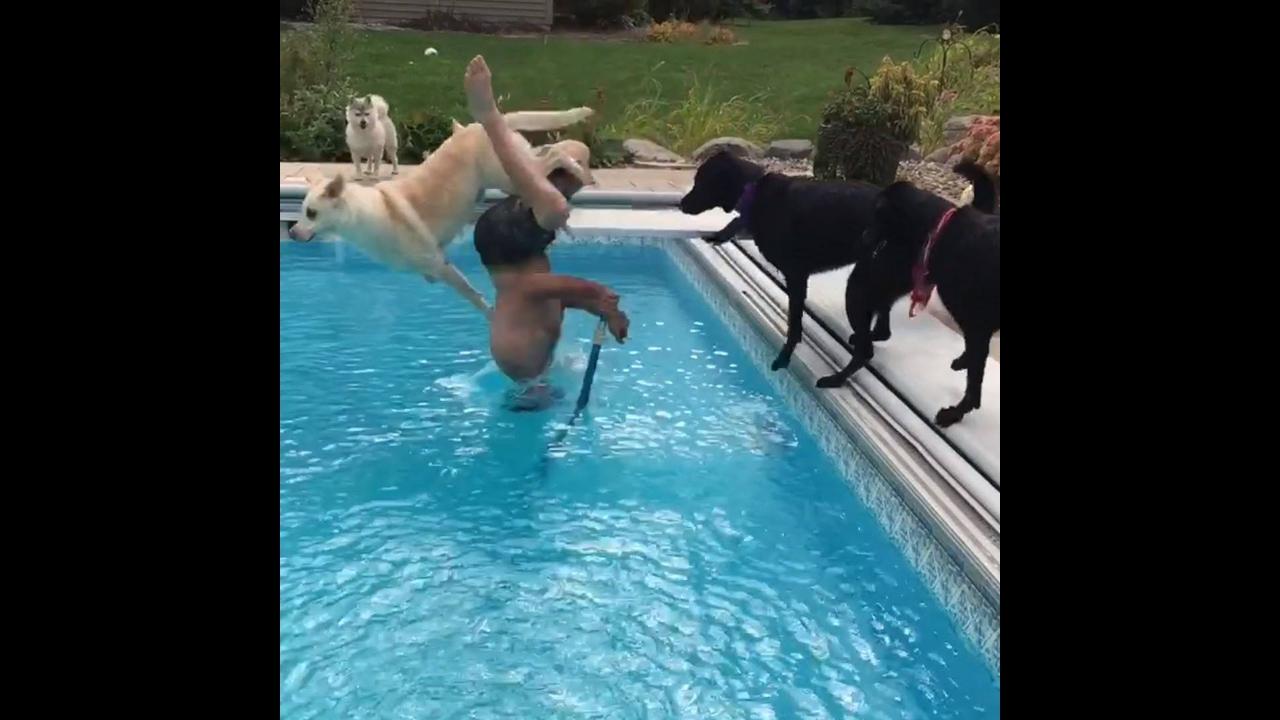 Cachorros e as cenas mais engraçadas com águas