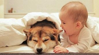 Cachorros E Bebês Fazendo Muitas Travessuras, Você Vai Se Apaixonar!