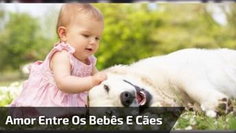 Cachorros E Bebês - Uma Dupla Que Todo Mundo Ama, Confira E Compartilhe!