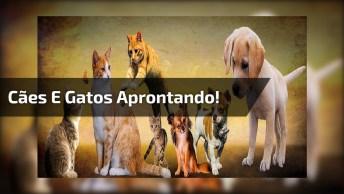 Cachorros E Gatos Aprontando Todas, É Uma Fofura Atrás Da Outra!