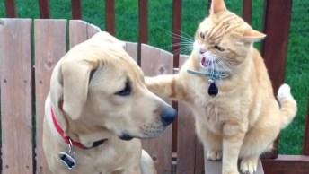 Cachorros E Gatos Brigando, Olha Só O Que Esta Galerinha Apronta!