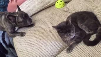 Cachorros E Gatos Uma Mistura De Muito Amor E Ódio, Hahaha!