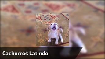 Cachorros E Os Latidos Mais Engraçados Que Se Possa Imaginar!