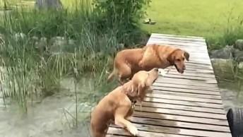 Cachorros E Seus Tombos Mais Engraçadinhos, Tente Não Rir!