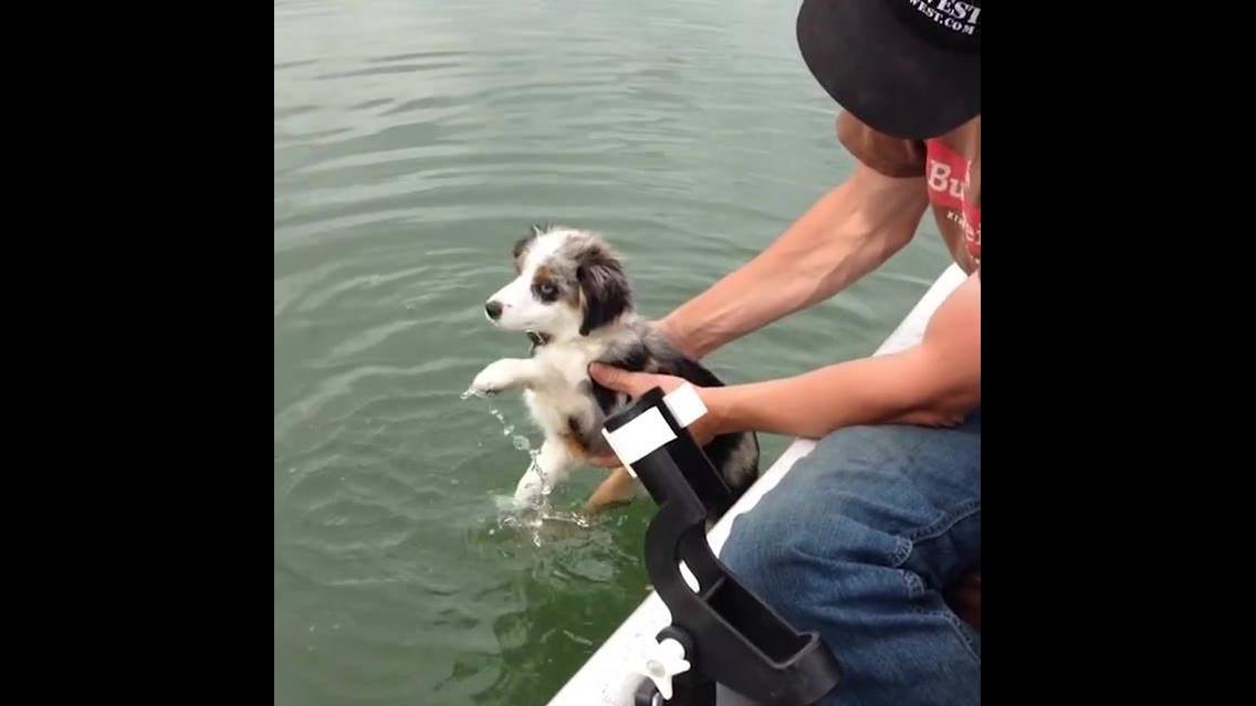 Cachorros e suas aventuras nas águas, tem até cachorro pilotando lancha!