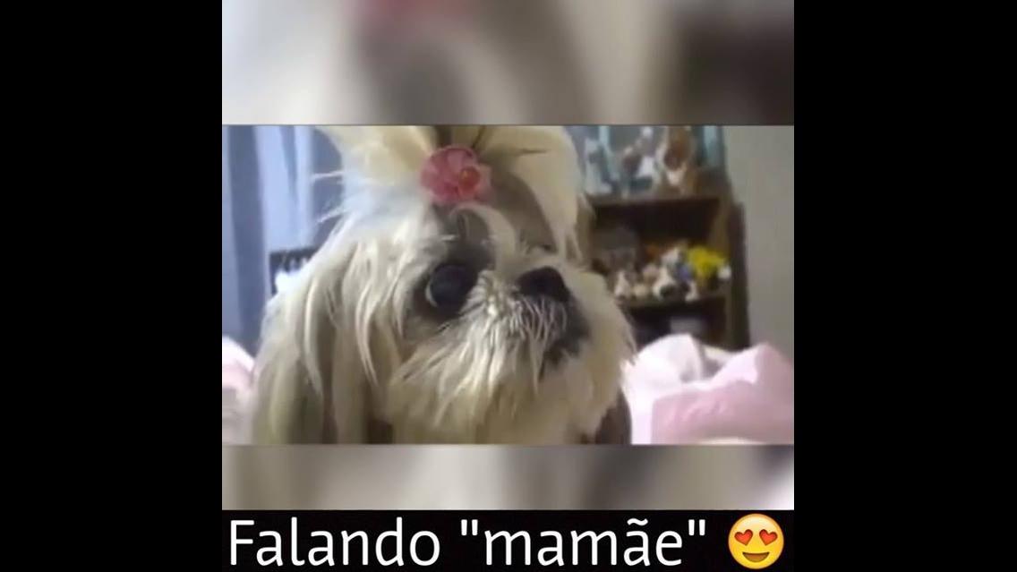Cachorros falando mamãe