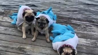 Cachorros Fantasiados De Tubarões, Cuidado Ao Passar Por Perto Deles Hahaha!