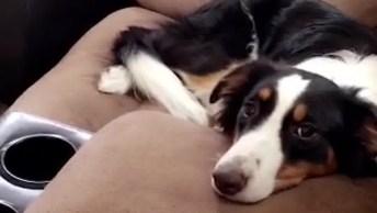 Cachorros Fazem Tremenda Bagunça Na Casa Enquanto Os Donos Estão Fora!