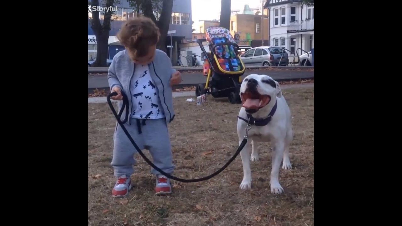 Cachorros fazendo a alegria das crianças