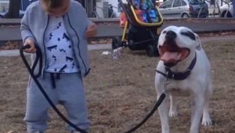 Cachorros Fazendo A Alegria Das Crianças, Um Vídeo Muito Fofo!