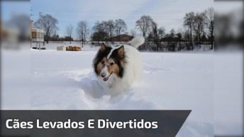 Cachorros Fazendo As Coisas Mais Engraçadas Do Dia, Para Rir Muito!