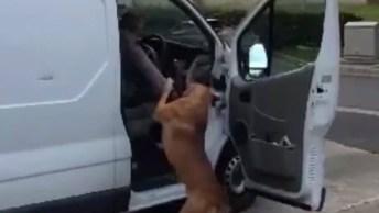 Cachorros Fazendo As Melhores Recepções Do Mundo, Que Fofura!