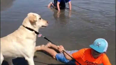 Cachorros Fazendo Coisas Engraçadas, Você Consegue Resistir Sem Rir?