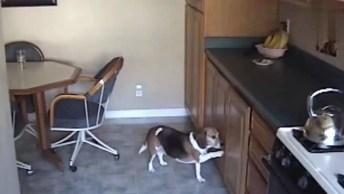 Cachorros Fazendo De Tudo Para Roubar Uma Comidinha, Olha Só O Que Eles Aprontam